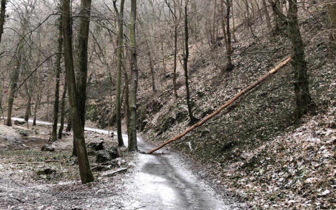 Do Gránic a lesíka v těchto dnech raději nechoďte